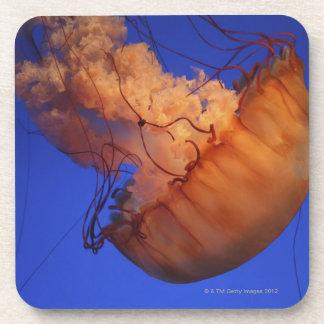 Sea nettle jellyfish coaster