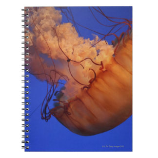 Sea nettle jellyfish notebook