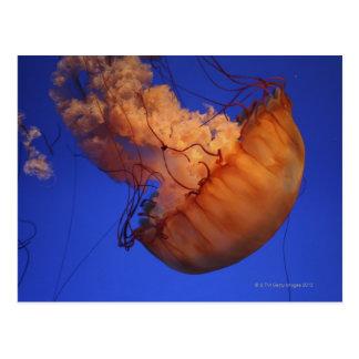 Sea nettle jellyfish postcard