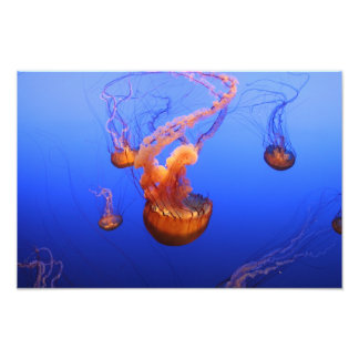 Sea Nettles in motion picture Art Photo