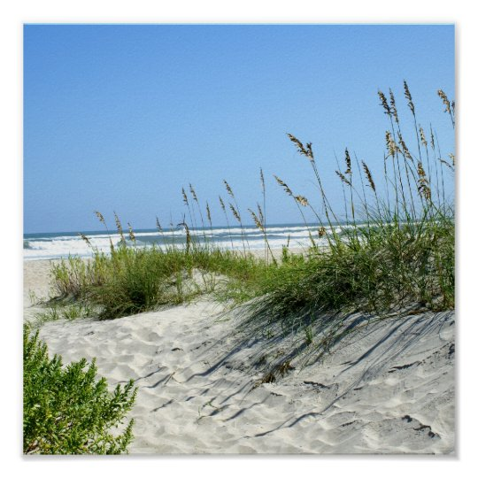 Sea Oats at Ocracoke Poster