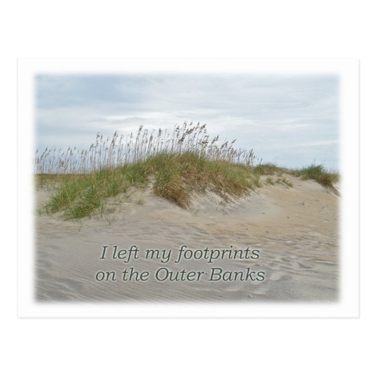 Sea Oats on Sand Dune Outer Banks NC