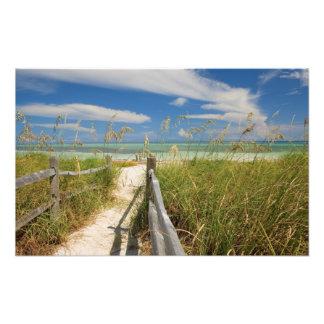 Sea oats Uniola paniculata) growing by beach, Photo Print