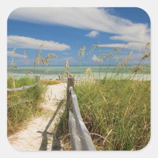 Sea oats Uniola paniculata) growing by beach, Square Sticker