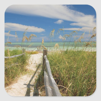 Sea oats Uniola paniculata) growing by beach, Sticker