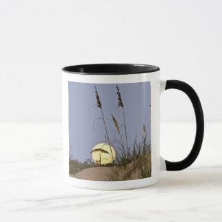 Sea Oats Uniola paniculata) growing on sand Mug
