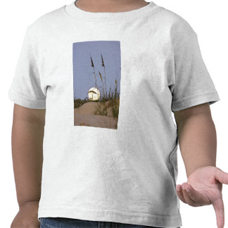 Sea Oats Uniola paniculata) growing on sand T Shirt