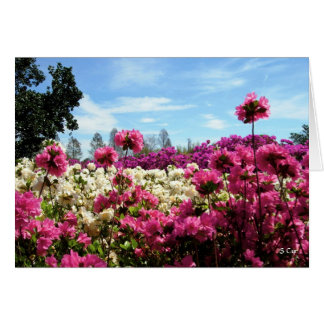 Sea of Azaleas, S Cyr Card