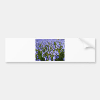 Sea of bluebells bumper sticker