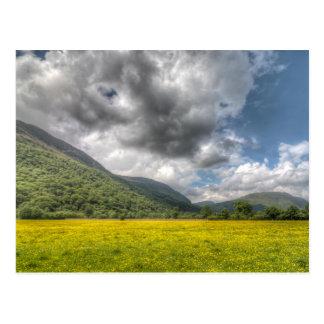 Sea of buttercups: The Lake District, Cumbria Postcard