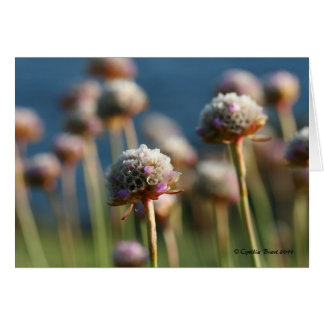 Sea of Thrift Greeting Card