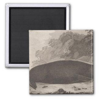 Sea otter, British Columbia Square Magnet