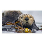 Sea Otter Business Card Templates