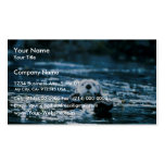 Sea Otter Business Cards