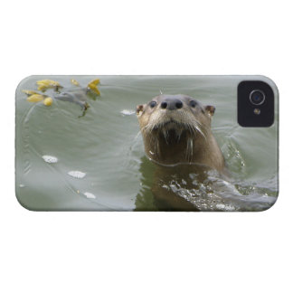 Sea Otter Cute Animal iPhone Case iPhone 4 Case-Mate Case