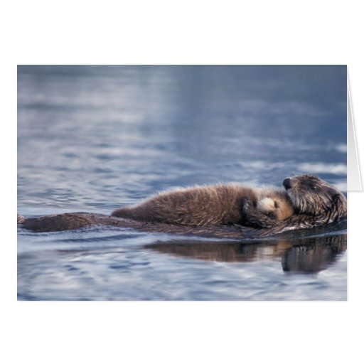 sea otter, Enhydra lutris lutris, mother with 2 Greeting Cards