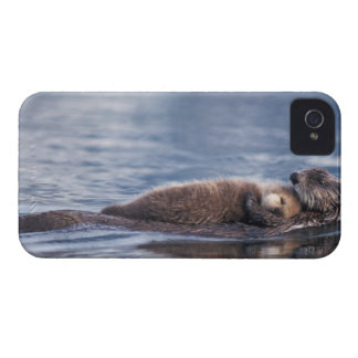 sea otter, Enhydra lutris lutris, mother with 2 iPhone 4 Cover
