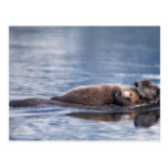 sea otter, Enhydra lutris lutris, mother with 2 Postcard
