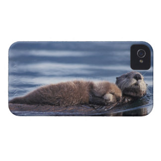 sea otter, Enhydra lutris lutris, mother with iPhone 4 Case-Mate Cases