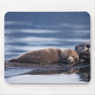 sea otter, Enhydra lutris lutris, mother with Mouse Mat