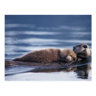 sea otter, Enhydra lutris lutris, mother with Postcard