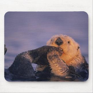 Sea Otter, Enhydra lutris Mouse Mat