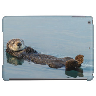 Sea otter floating on back in ocean