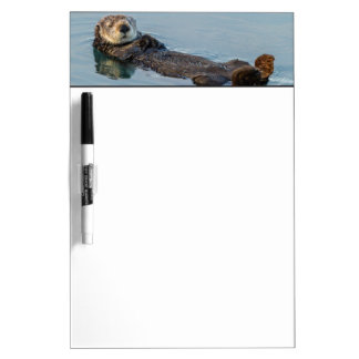 Sea otter floating on back in ocean dry erase board