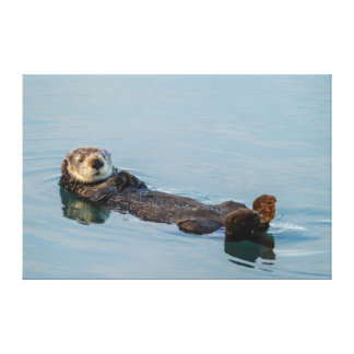 Sea otter floating on back in ocean gallery wrap canvas
