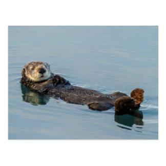 Sea otter floating on back in ocean postcard