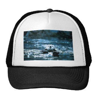 Sea Otter Hats