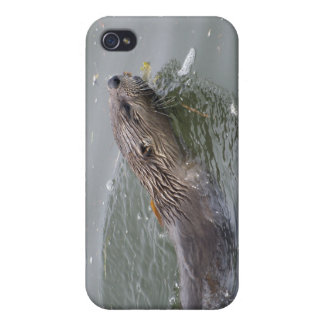 Sea Otter  iPhone Cases iPhone 4/4S Cover