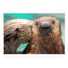 Sea otter love postcard