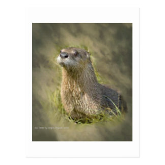 Sea Otter PostCards