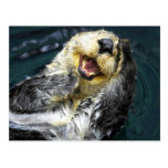 Sea Otter Postcards