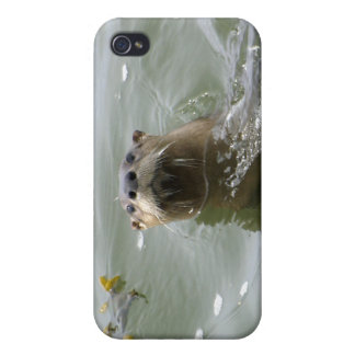 Sea Otter Speck  iPhone Cases iPhone 4 Cases