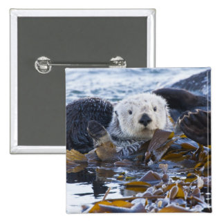 Sea otter wrapped in kelp 15 cm square badge
