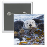 Sea otter wrapped in kelp buttons