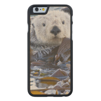 Sea otter wrapped in kelp carved maple iPhone 6 case