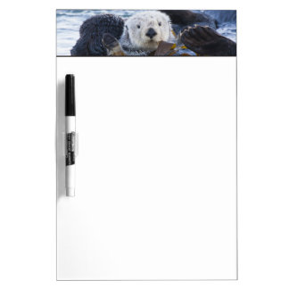 Sea otter wrapped in kelp dry erase whiteboards