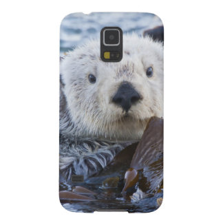 Sea otter wrapped in kelp galaxy s5 cover