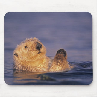 Sea Otters, Enhydra lutris 2 Mouse Mat