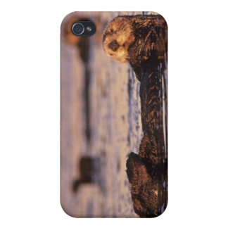 Sea Otters, Enhydra lutris 3 iPhone 4/4S Cover