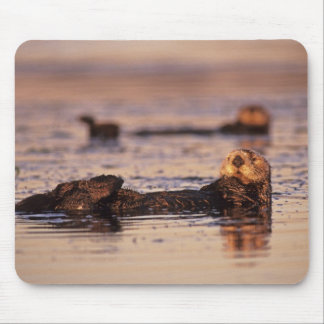 Sea Otters, Enhydra lutris 3 Mouse Mat