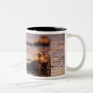Sea Otters, Enhydra lutris 3 Two-Tone Coffee Mug