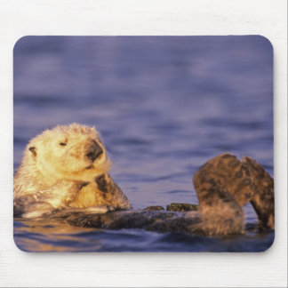 Sea Otters, Enhydra lutris 4 Mouse Pad