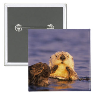 Sea Otters, Enhydra lutris 5 15 Cm Square Badge