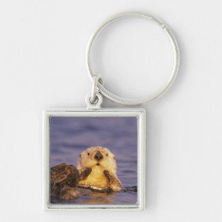 Sea Otters, Enhydra lutris 5 Key Ring