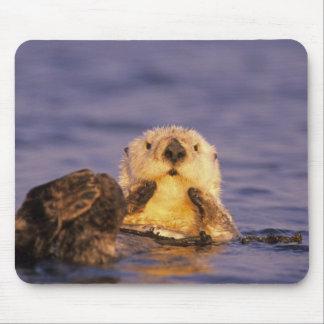 Sea Otters, Enhydra lutris 5 Mouse Mat