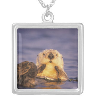 Sea Otters, Enhydra lutris 5 Silver Plated Necklace